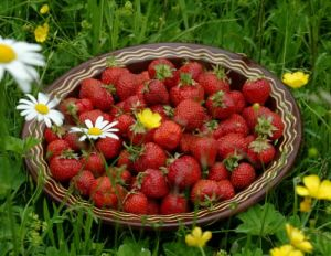 jordbær i blomstereng[1]